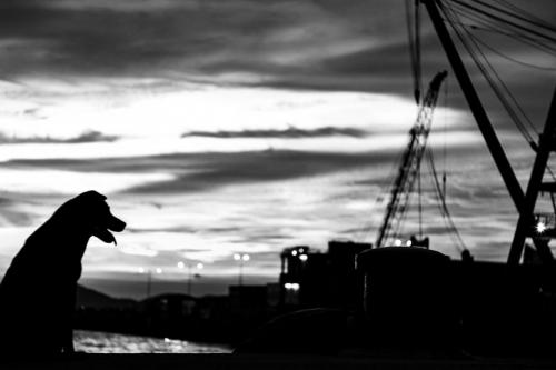 Silhouettes of the City - Rinske Sabine Kuiper